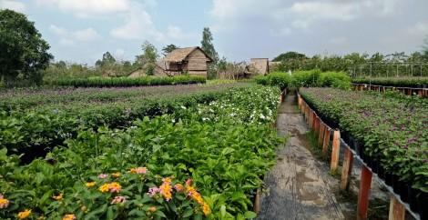 Sa Đéc phát triển du lịch  gắn với làng nghề trồng hoa