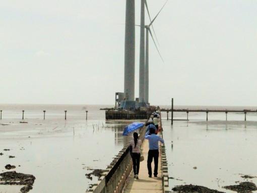 Cánh đồng điện gió trở thành điểm du lịch tiêu biểu ĐBSCL