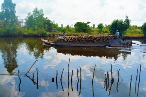 Sức sống mới trên đất rừng U Minh Hạ