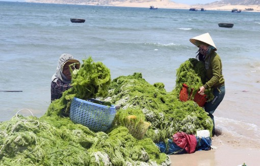 Marine economy makes up 10 percent of Vietnam's GDP