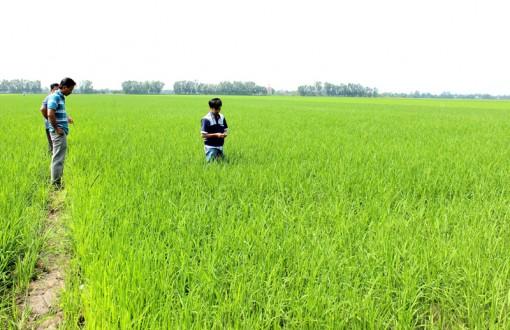 Phát triển nông nghiệp bền vững từ nguồn vốn tài trợ