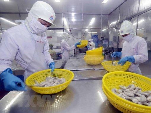 EU remains top market of Vietnamese shrimp
