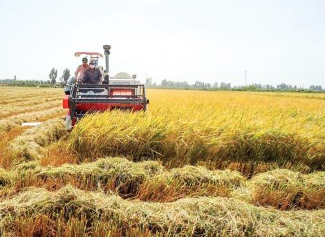Phát triển kinh tế hợp tác ở huyện Vĩnh Thạnh