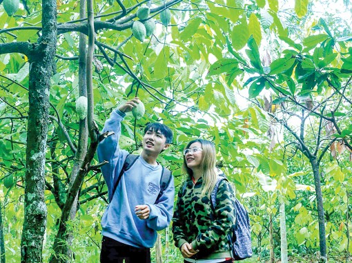 Phong Điền vào mùa trái cây trĩu quả