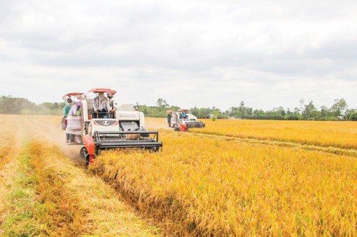 """Để ngành lúa gạo thoát cảnh """"nay trồi, mai sụt""""…"""