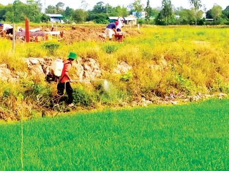 Nên giảm sử dụng thuốc trừ cỏ