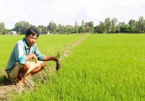 Nhân rộng mô hình trồng lúa giống