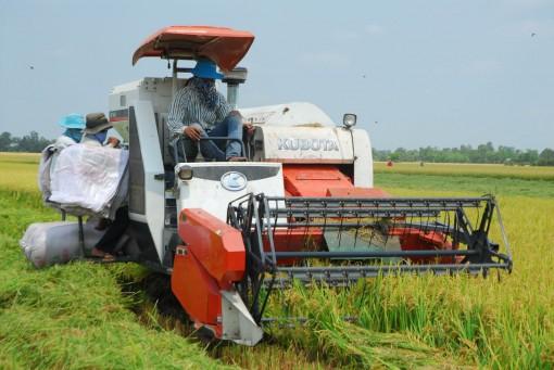 Dư nợ cho vay thu mua lúa gạo tăng hơn 18%