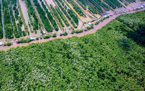Phát triển kinh tế rừng ở U Minh Hạ