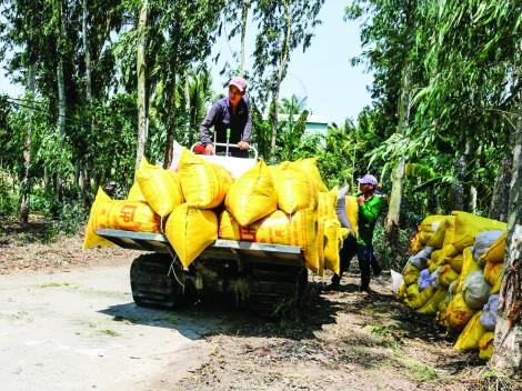 Giá lúa, gạo tăng nhẹ