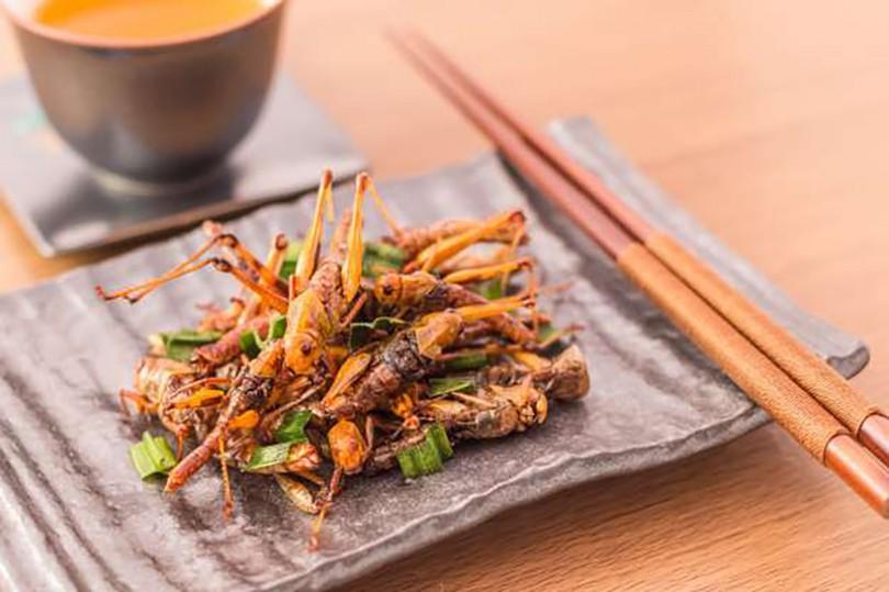 Ăn côn trùng có thể phòng chống ung thư