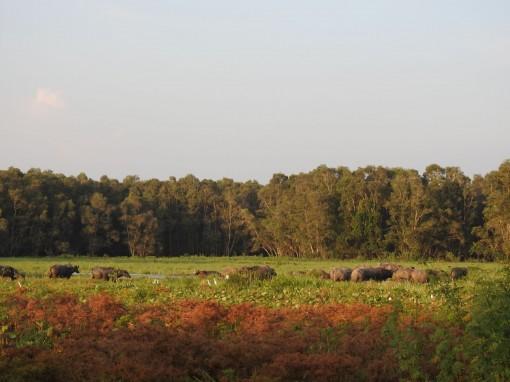 Vườn quốc gia Tràm Chim - Một Đồng Tháp Mười thu nhỏ
