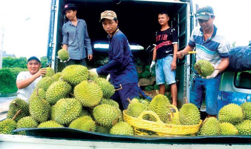 Phát triển bền vững vùng trồng cây ăn trái tập trung