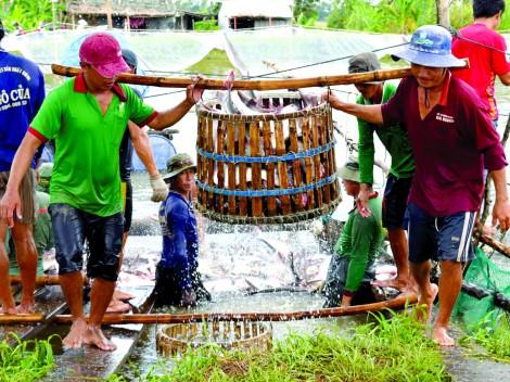 Xuất khẩu cá tra - bước qua  khó khăn nắm bắt cơ hội mới