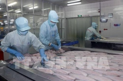 Tra fish firms report sharp rises in second quarter earnings