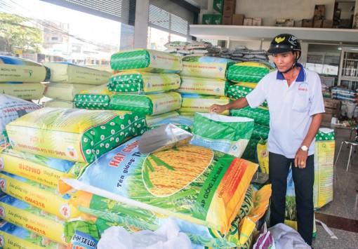 Hỗ trợ nông dân sản xuất lúa giống