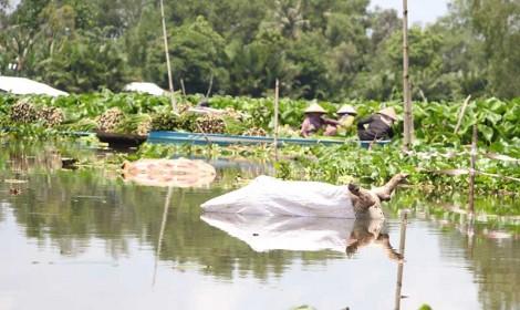 Quyết liệt ngăn chặn tình trạng vứt xác heo xuống sông