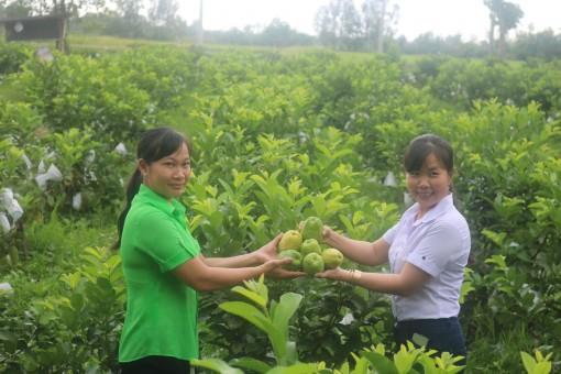 Chuyển đổi cơ cấu cây trồng vật nuôi