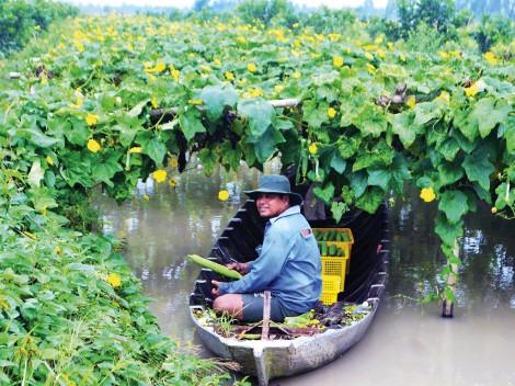 Thoát nghèo nhờ trồng rau an toàn