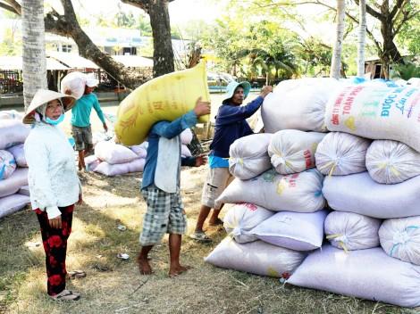 Nâng cao hiệu quả sản xuất lúa gạo