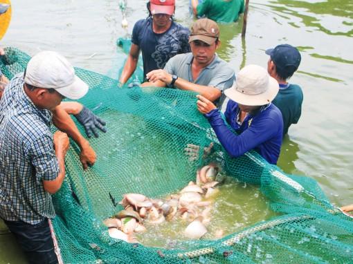 Phát triển đa dạng, mở rộng diện tích nuôi thủy sản