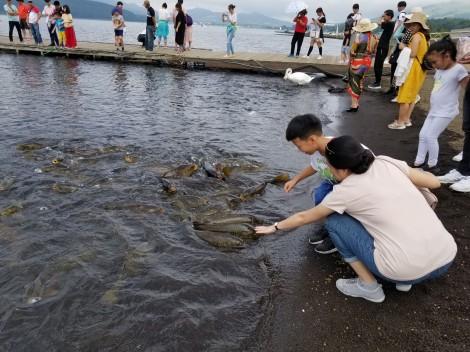 """Khám phá """"Đất nước mặt trời mọc"""": Sờ cá chép và chinh phục """"nóc nhà"""" Nhật Bản"""
