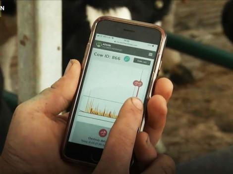 Thử nghiệm mạng 5G để nuôi bò