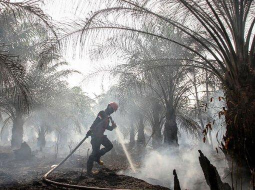 Căng thẳng vì cháy rừng ở Indonesia