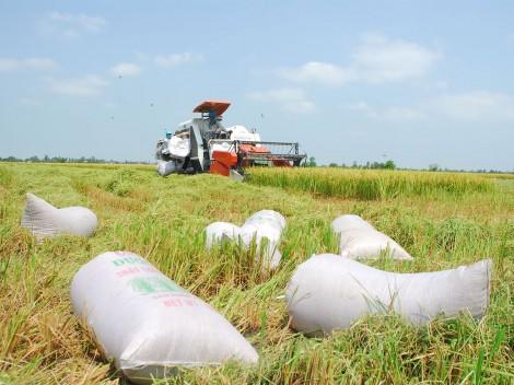 Thay đổi chiến lược đầu tư ngành gạo