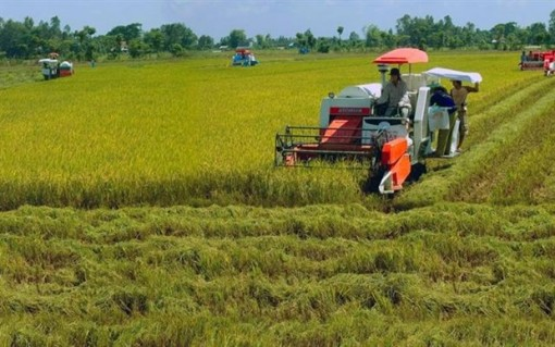 Local rice industry needs technology in preservation, processing