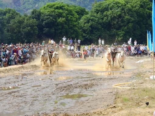 Tưng bừng Lễ hội đua bò Bảy Núi lần thứ 26
