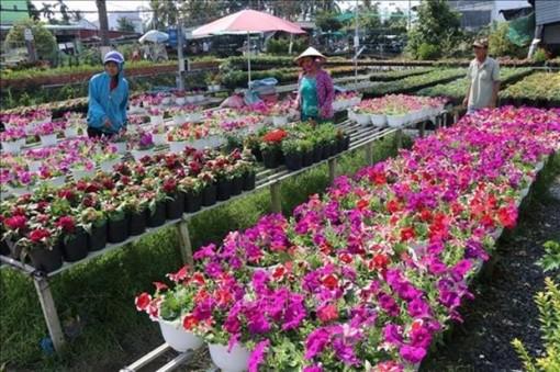 Mekong Delta province enjoys boom in agrotourism