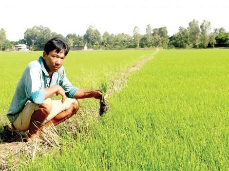 Để Hội xứng đáng là chỗ dựa tin cậy của nông dân