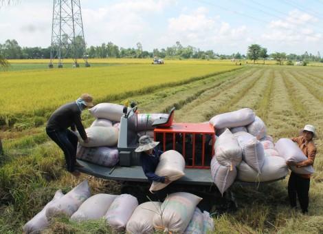 Phát triển vùng sản xuất nông sản hàng hóa chất lượng cao