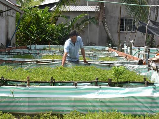 Phát triển sản xuất, xây dựng bền vững nông thôn mới
