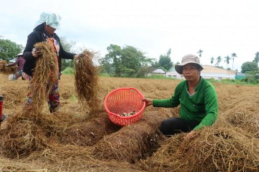 Để phế phẩm nông nghiệp phát huy giá trị kinh tế