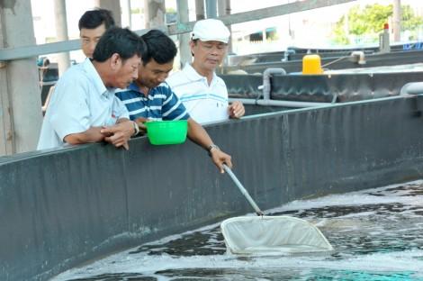 Nuôi tôm siêu thâm canh trong hồ nổi tròn ở Bạc Liêu