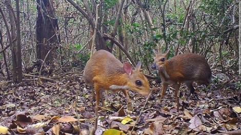 Động vật bí ẩn nghi đã tuyệt chủng xuất hiện tại Việt Nam