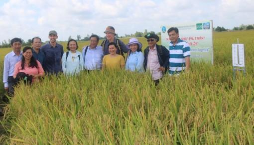 Dự án VNSAT góp phần phát triển chuỗi giá trị lúa gạo bền vững