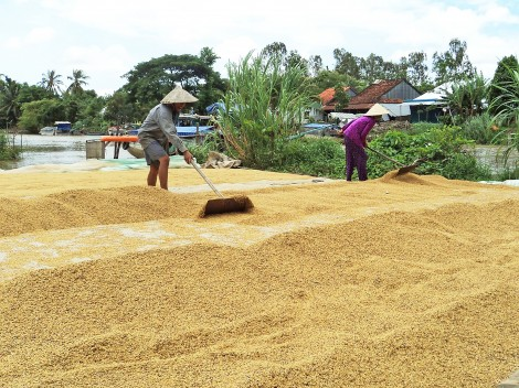 Xoay trục để nông nghiệp ĐBSCL phát triển thịnh vượng, bền vững