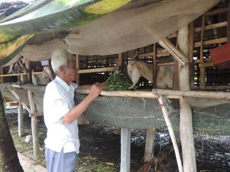 Tăng thu nhập, giảm nghèo tại các xã nông thôn mới