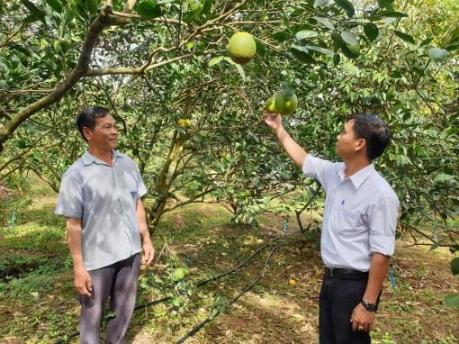 Hỗ trợ nông dân phát triển vườn cây ăn trái