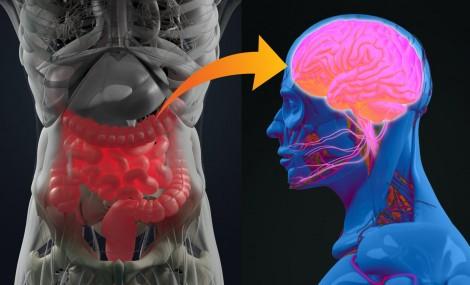 Lợi khuẩn ruột - liệu pháp tiềm năng chữa bệnh Parkinson