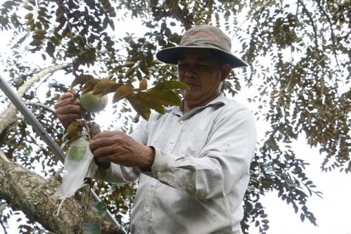 OCOP- Động lực mới phát triển kinh tế nông thôn