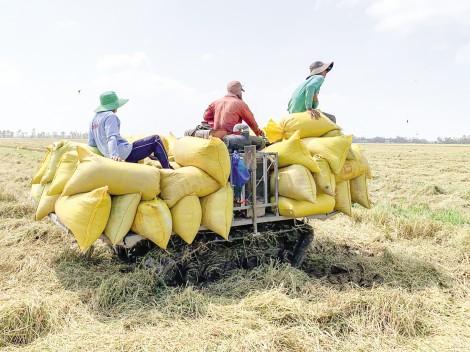 Gần 29.700ha lúa mùa, đông xuân ở ĐBSCL  bị ảnh hưởng do hạn hán, xâm nhập mặn