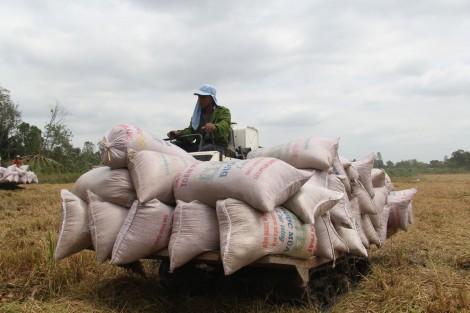 Duy trì sản lượng lúa trên 1,3 triệu tấn