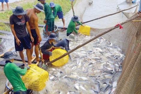 Cơ hội cho ngành hàng cá tra xuất khẩu