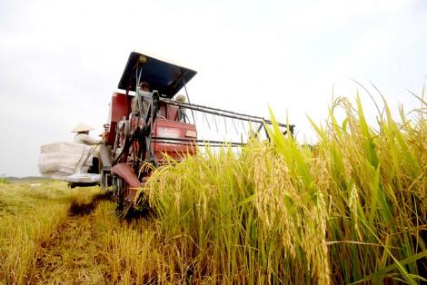Tình hình tiêu thụ nông sản gặp khó do ảnh hưởng của dịch Covid-19