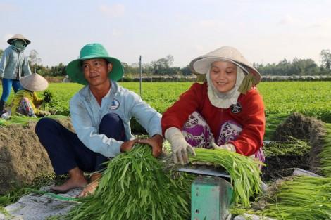 Liên kết hình thành chuỗi giá trị hàng hóa nông sản