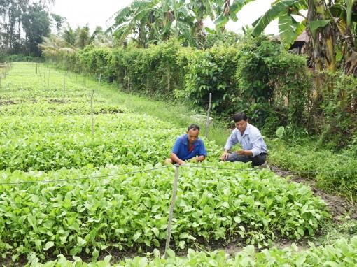 Chuyển đổi cơ cấu sản xuất, canh tác cây trồng sử dụng ít nước trong mùa khô hạn, xâm nhập mặn